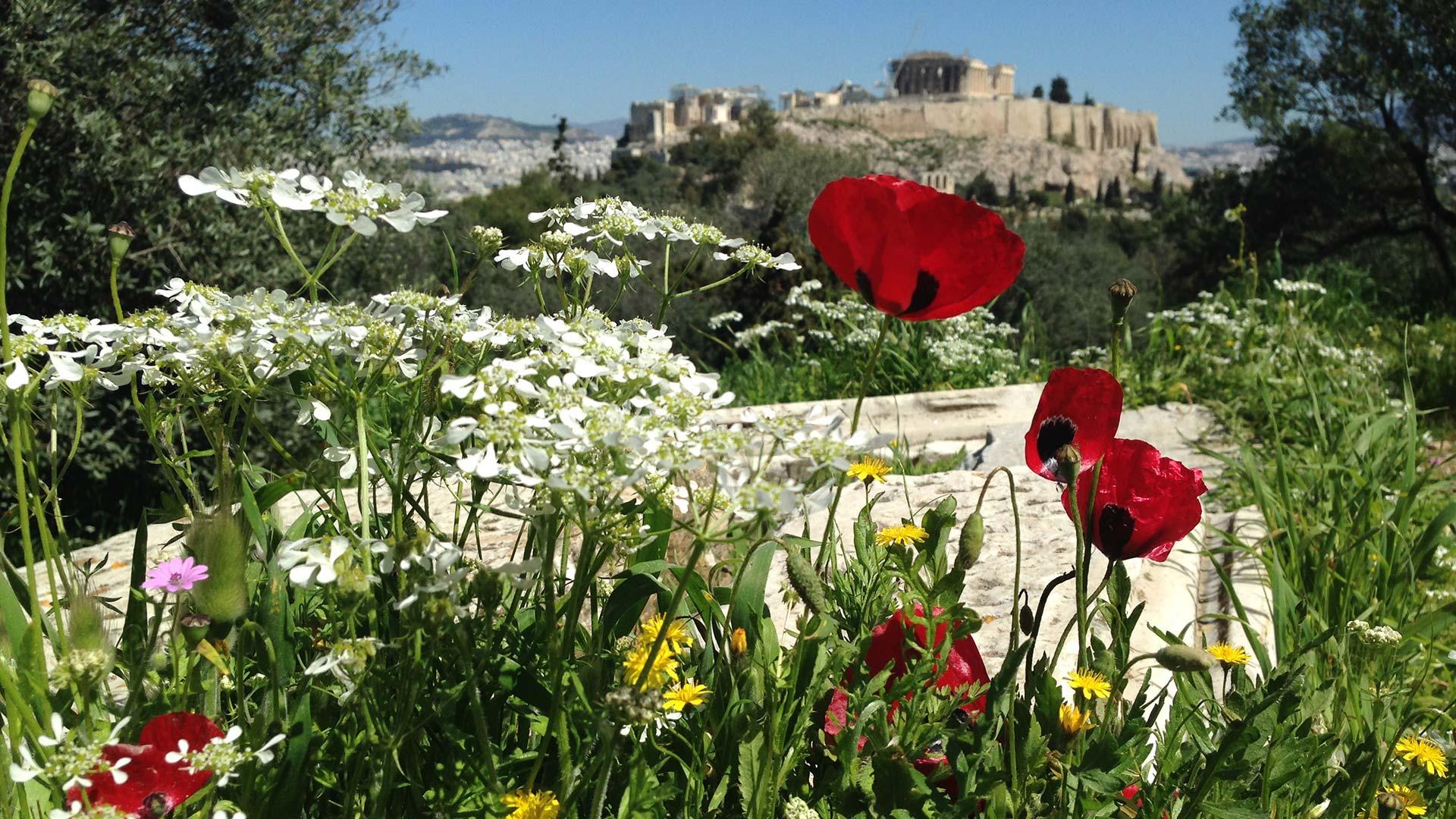 Hidden Athens tour